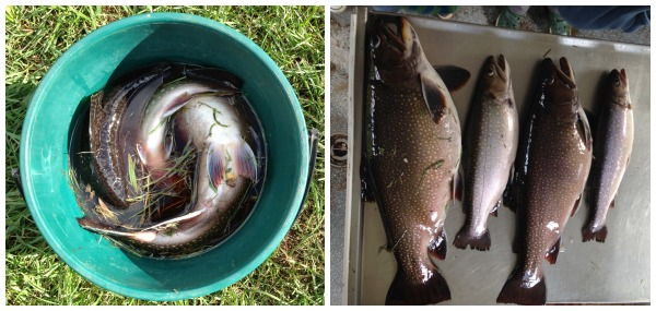 Trout #3 Collage